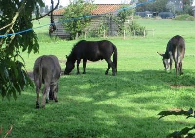 dieren tekenen boerderij bouwlust