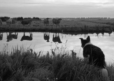 Chanoek in de polder